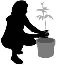 gardener-kneelsm