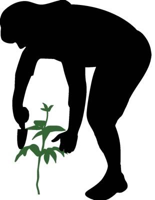 gardener-planting