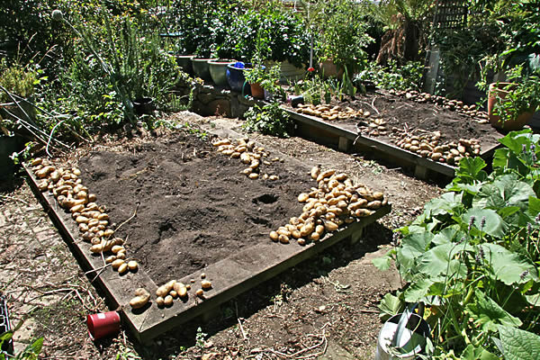 potatoes2010