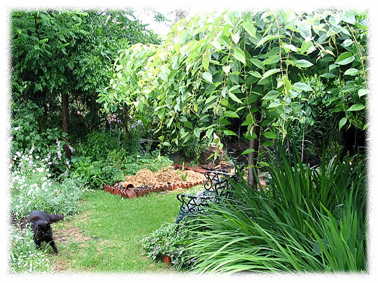 ashcotte-garden01